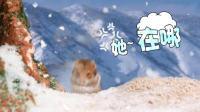 一只仓鼠: 整整三年从春天等到冬天, 看到最后我哭了