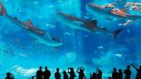 这是世界上最大的水族馆? 里面养着鲸鲨, 安检比机场严格