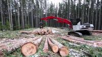世界上最快的伐木机器, 参天大树秒变光棍, 关键还不挑食!