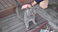 主人摸着猫咪, 猫咪小嘴动下动下的不懂说啥, 求翻译