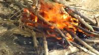 澳洲小哥  荒野求生 野外生存生存哥 烹饪 竹筒鱼