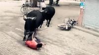 实拍: 公牛当街发飙狂奔无辜男子被撞飞