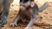 幸福的小猴子, 有这么多兄弟姐妹陪着它