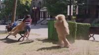 路人捡娃娃熊, 突然娃娃熊蹦起来跑了, 路人的反应太可爱了!