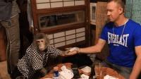 这家酒馆别出心裁, 雇佣猴子当服务员, 业绩暴涨几十倍!