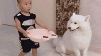 看小主人端水洗脚, 狗狗的举动让人直呼暖心, 太懂事了!