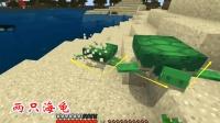 我的世界第二季96: 我将目标转向海洋, 用海草引了两只海龟上岸