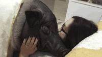 23岁女子不顾家人反对, 疯狂爱上一头公猪, 种种行为让人无法理解