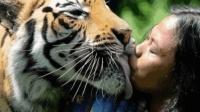 老虎舔一口, 半边脸没有, 老虎舌头真的那么恐怖吗?