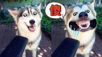 同样都是狗子, 智商差别怎么这么大!