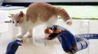 猫真不怕蛇? 小奶猫见到蛇立刻炸毛超凶, 下一秒却怂了拔腿就跑