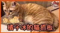 【巧克力】『橘子冰的日常』- 橘子冰的猫抓板