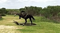 鳄鱼正在悠闲的晒太阳, 却遭到马的践踏, 鳄鱼这下受伤可不轻