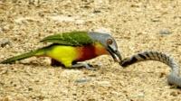 本想小鸟要被蛇吃掉, 没想到蛇却成为小鸟的食物, 网友: 变天了?