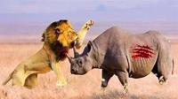 狮子觊觎小犀牛, 尾随身后, 无奈牛妈护犊, 结果让人很安心!