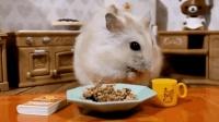 小仓鼠吃午餐, 吃这么多你不胖谁胖, 小家伙伙食还不错