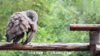 老外好奇: 大熊猫PK藏獒谁更厉害? 网友: 你该问它能吃几只藏獒