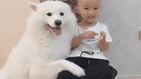 女主人要照相, 让狗狗和宝宝亲密点, 它这样算成精了吗?