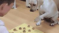 狗狗陪主人下象棋, 它好像有点蒙, 犹豫不决的样子太搞笑了