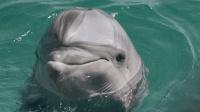 代表12星座的海豚有哪些? 狮子座的伪虎鲸听起来就很霸气!