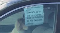 国外一狗狗被锁车里, 路人正想砸窗, 看到这张纸笑哭!