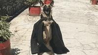 这狗喝多了吗, 西服都穿出来了, 这是要扮赌神还是地烫脚呀?