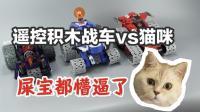 遥控积木战车vs猫咪, 会是什么情况? 【涛哥测评】