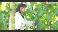 谭松韵这个小吃货摘葡萄, 还要边吃边摘!