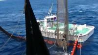 在深海捕鱼的大渔船——捕金枪鱼