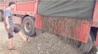 江西百余吨非法捕捞螺蛳被查获 装满6辆大车