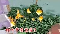 我的世界联机第二季27: 听粉丝说树顶上有宝箱, 我们烧掉树叶寻找