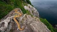"""世界最唯一的""""蛇岛"""", 岛上生活43万条毒蛇, 没人敢去这个岛上!"""