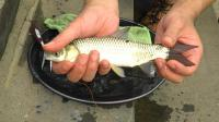 野河钓到小草鱼