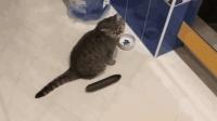 猫咪害怕黄瓜的原因