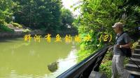 野河有鱼钓的欢(2): 花地河钓获鲤鱼、泰鲮、罗非。