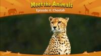 Little Fox小狐狸英语动画| 认识动物4| 猎豹| 趣味英文学习