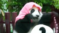 连刀都难砍断的大竹子, 在熊猫面前就是长条饼干, 还吃得嘎嘣脆