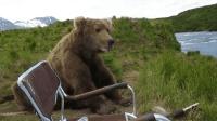 一头俄罗斯棕熊, 看到有人在河边钓鱼, 安静在一旁做起观众来