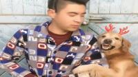 狗狗跟爸爸一起跳表情舞, 真的很像了, 给妈妈乐坏了