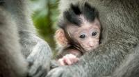 超感人! 可怜的小猴子当场丧命