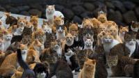 猫真的有九条命? 科学家用150只猫做实验, 结果猫真的不会死