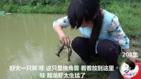 农村姑娘胆子真大! 徒手在洞里抓龙虾
