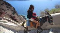 世界上最辛苦的毛驴, 每天要载人爬数万台阶, 坚持不了就被遗弃!