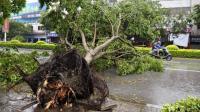 """台风""""山竹""""的名字含义何在? 谁给命名的? 为啥要叫这个名字?"""