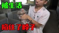 【小猪】看完这个视频你就会知道, 竹鼠都是被什么理由所杀的!