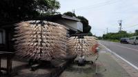 日本用自制机器风干鱿鱼, 比晾晒的还好吃! 网友: 灵感来自电扇?