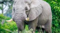 大象娴熟的摘下菠萝蜜, 扒皮时却让乌龟享用了美食