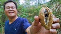 自然生活体验视频 传说中的八月炸开瓜 中秋户外活动