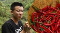 据说贵州人最能吃辣, 欢子摘这么多红辣椒, 在线等网友建议吃法
