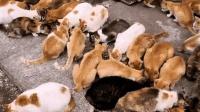 这里就是猫奴的天堂, 只要有吃的, 一群猫粘着你, 太幸福啦